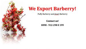 selling Barberry